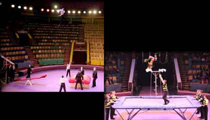5668 Circus Group